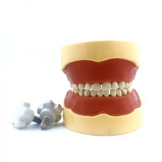 Typodont Jaw Pedo - API